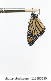Monarch Butterfly Dangling from Artist Paint Brush