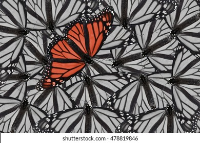 A monarch butterfly edited in red and placed on a black and white background of monarch butterflies. Bold and daring for a variety of ideas and concepts. Horizontal or vertical format with copy space.