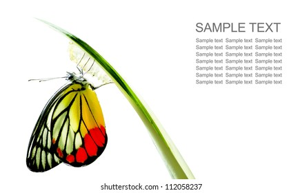 Monarch Butterfly, Milkweed Mania, baby born in the nature isolated on white background