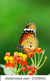 A monarch butterfly on flower.