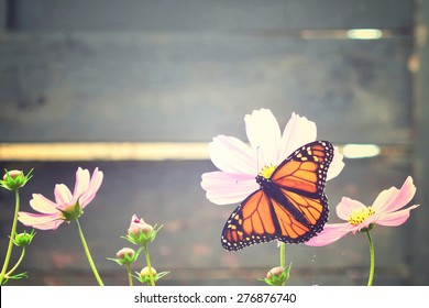 Monarch butterfly on a flower. Vintage background