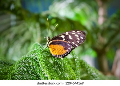Sưu tập Bộ cánh vẩy 2 - Page 79 Monarch-butterfly-on-leaf-260nw-1204644169
