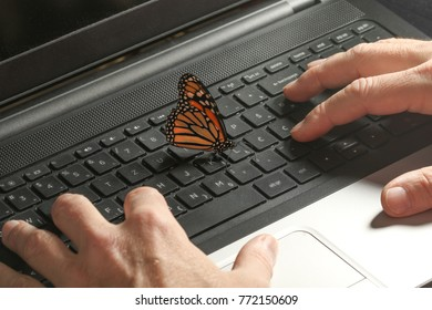 Monarch Butterfly on the pc  keyboard and ecological energy concept