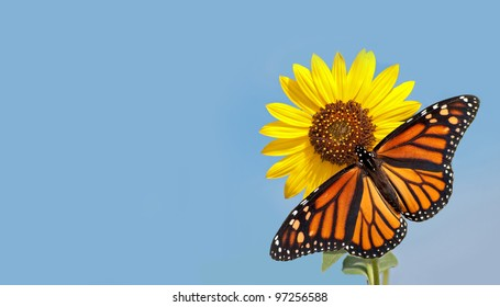 Monarch butterfly on sunflower against clear blue sky - a business card design with pure nature concept