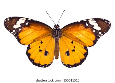 Monarch butterfly on white background, Clipping path