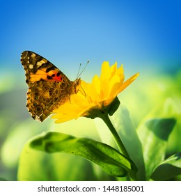 Monarch butterfly on yellow flower with blue sky