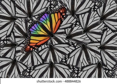 A monarch butterfly placed on a black and white background of monarch butterflies. Bold and daring for a variety of ideas and concepts. Horizontal or vertical format with copy space