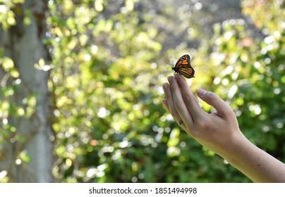 Monarch Butterfly Release On Hand