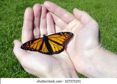 Monarch Butterfly sites on hands. Concept photo of freedom, resurrection, hope, joy, new beginnings, rebirth, transformation and change.