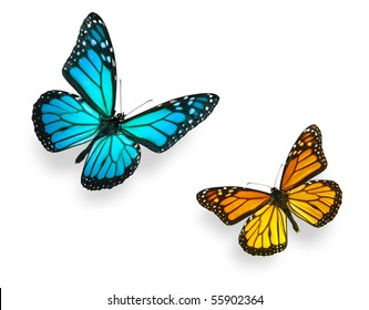 Monarch butterfly in various flying positions in bright blue and vivid orange. Isolated on white, studio shot.
