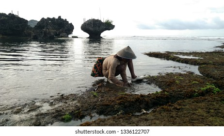 Monday March 11 2019 the beach of Drini, Tanjungsari, Gunungkidul. Mr. Pujo with a bamboo hat is looking for seaweed. The bed in its back to accommodate the results.