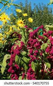 Monet's Garden Giverny France