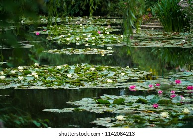 Monet's Giverny garden famous water lilies and its pink and white flowers.