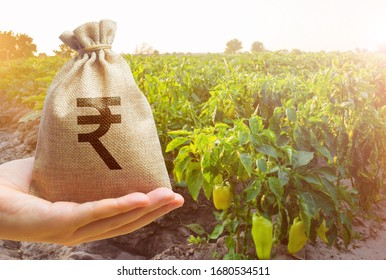 Money bag in the hand of the farmer on the background of agricultural crops. Profit from agribusiness concept. Agricultural startups. Lending and subsidizing farmers. Countryside