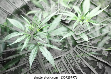 Money In Black & White With Marijuana Leaves Representing The Cannabis Market Profits