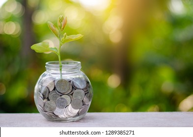 money Bottle Banknotes tree Image of bank note with plant growing on top for business green natural background money saving and investment financial concept