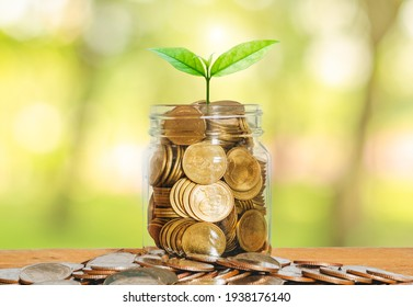 money for business investment finance and banking concept. green plant leaves growth up on row of saving coin stack on wood table with green blur nature background.