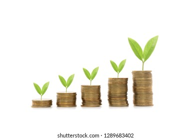 Money coin stack growing graph on white background