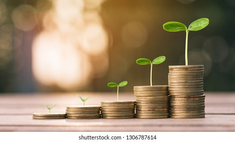 Money coin stack growing graph with sun light bokeh background,investment concept.plant growing on coin,Business Finance and Save Money concept