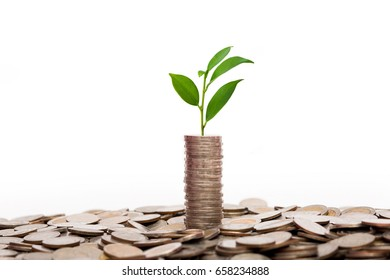 Money coin stack growing and trees for business finance and money concept isolated on white background.