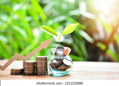money coins saving increase to high profit interest for concept investment mutual fund finance and business