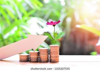 money coins saving set increase to high profit interest for concept investment mutual fund finance and pension retirement