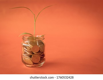 Money coins and tree growing in jar. Profit on deposit in bank and dividend for stock investment concept with orange vintage background