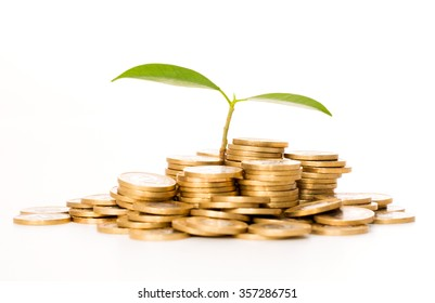 Money concept. Plant growing on coins.