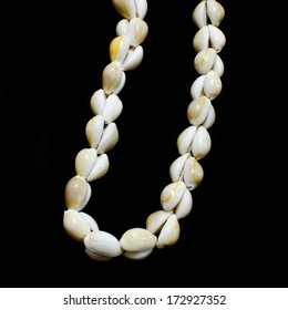 Money cowry sea shell necklace on black background
