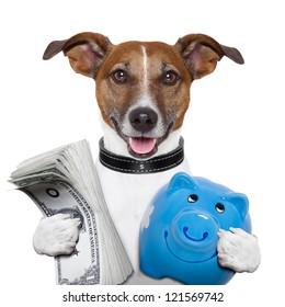 money dog holding a blue piggy bank