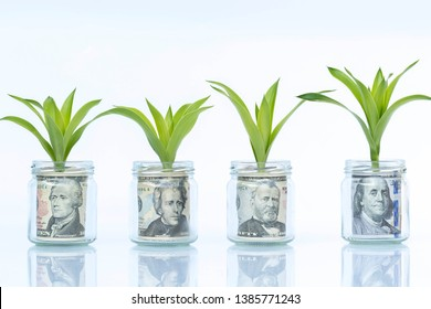 Money or dollar growing plant step with deposit bank note in bank concept