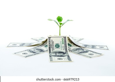 Money dollars with green sprout