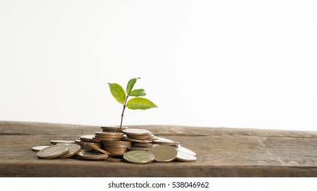Money, Financial, Business Growth concept
