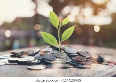 Money growing concept, Plant on pile coins with night bokeh lights background. Vintage Tone