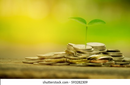 Money growing concept,Business success concept,Trees growing on pile of coins money
