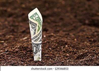 Money growing. One dollar bill in soil.