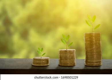 Money growing plant step with deposit coin in bank concept, clipping path.