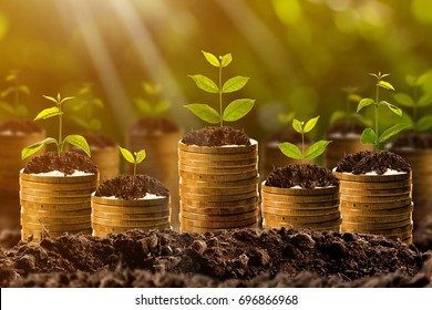 Money growing in soil,success concept