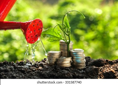 Money growth concept plant growing out of coins