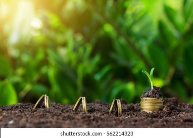 Money growth and seedling on top. concept coins in soil.Yellow tone