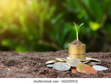 Money growth and seedling on top. concept coins in soil.Yellow tone with sun