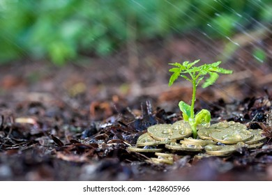 Money growth, seedling and rain. concept coins in soil