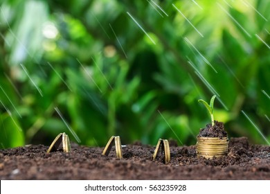 Money growth, seedling and rain on top. concept coins in soil