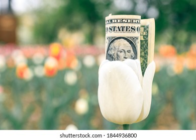money inside a flower growing in the park. flower business
