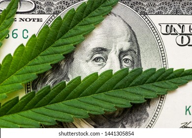 Money and marijuana. Concept of business, medicine and selling hemp, drugs. Hundred dollar bill of the USA Franklin.