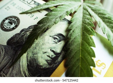 Money With Marijuana Leaf Close Up High Quality