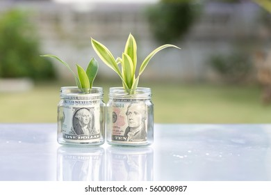 Money one and ten dollar  growing plant step with deposit bank note  in bank concept