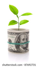 Money and plant isolated on white