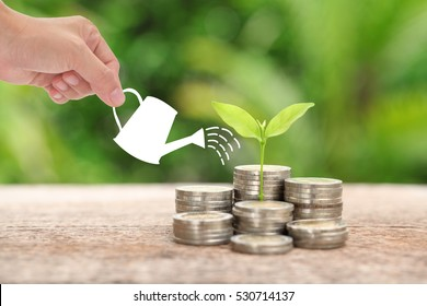 Money and plant with woman hand  hold watering can and tree, Saving money concept,