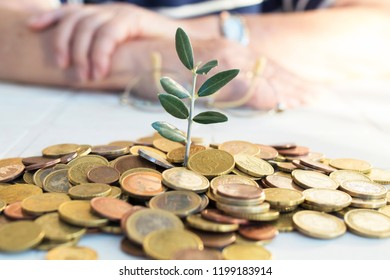 money stacked with young plant and hands of senior retired or elderly, concept of savings